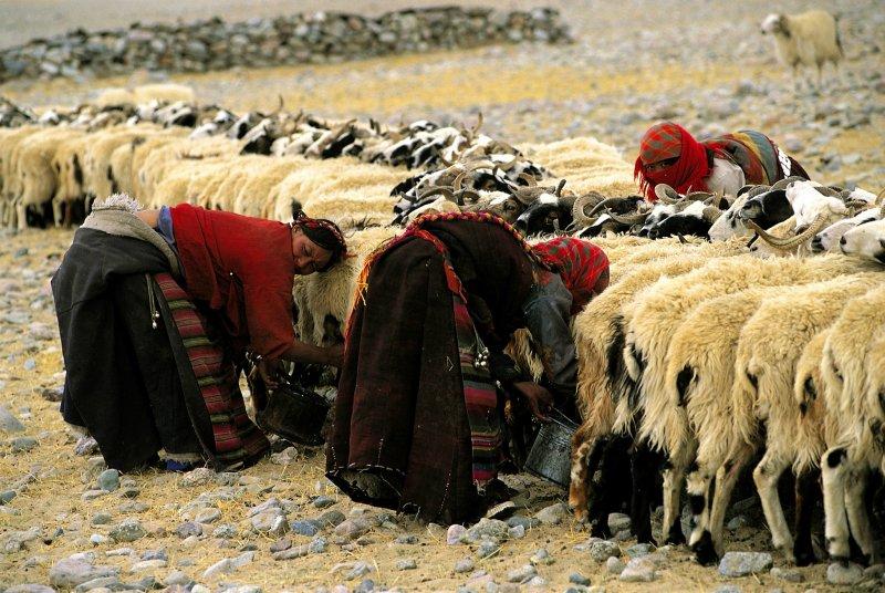 Tibet Journeys