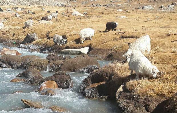 Tibet Upplevelseresa_9