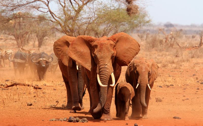 Karibu safari (123)_webb500