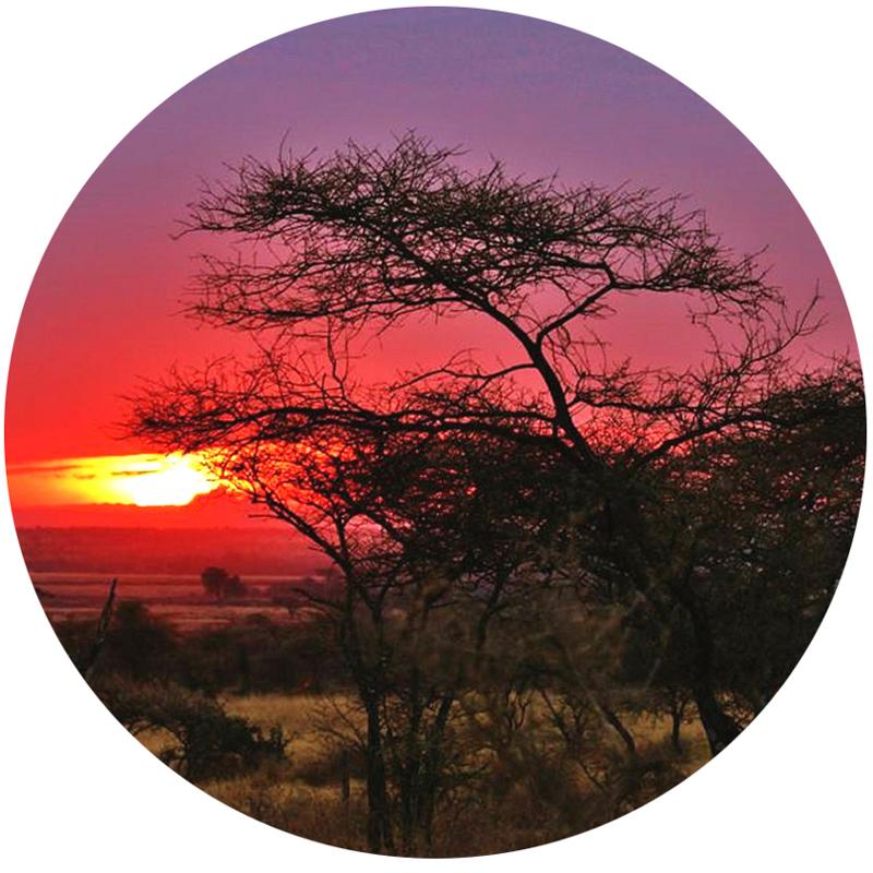 Serengeti_solnedgång_2_cirkel