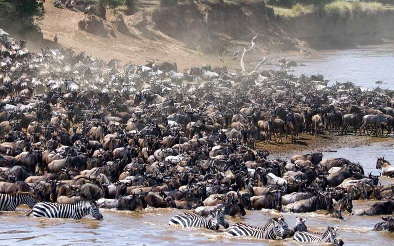 Tanzania Kenya_safari 59 webb