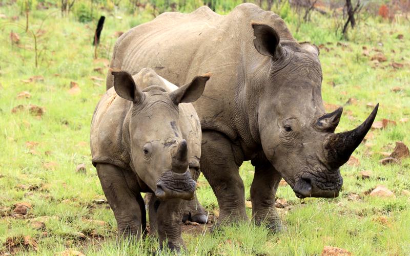karibu safari (118)_webb500