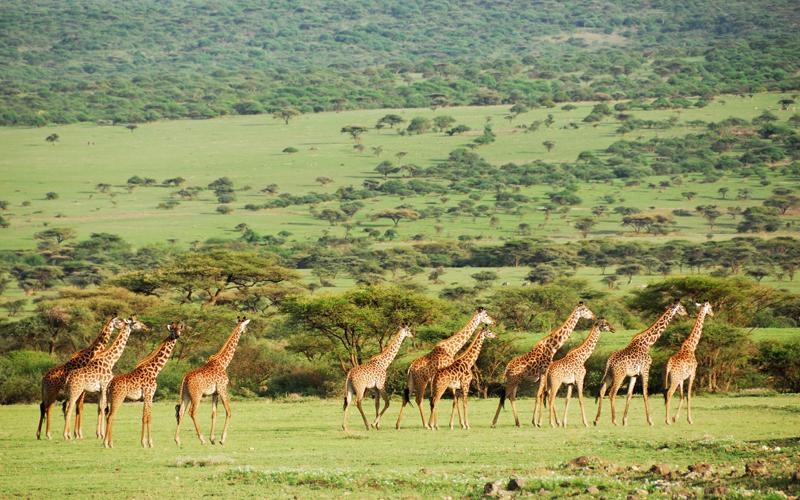 karibu safari (124)_webb500