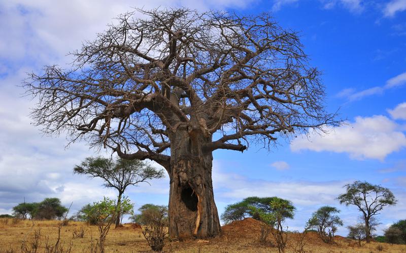 karibu safari (137)_webb500