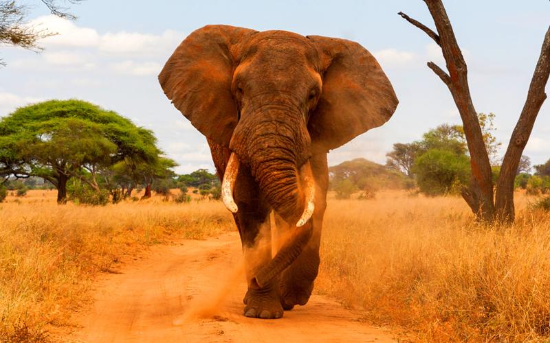 karibu safari (291)_webb500