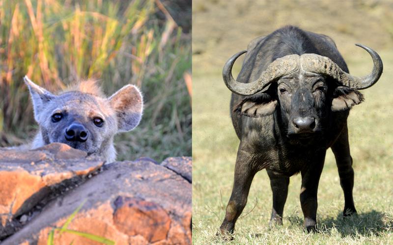 karibu safari _kollage2_(216_287)_webb500