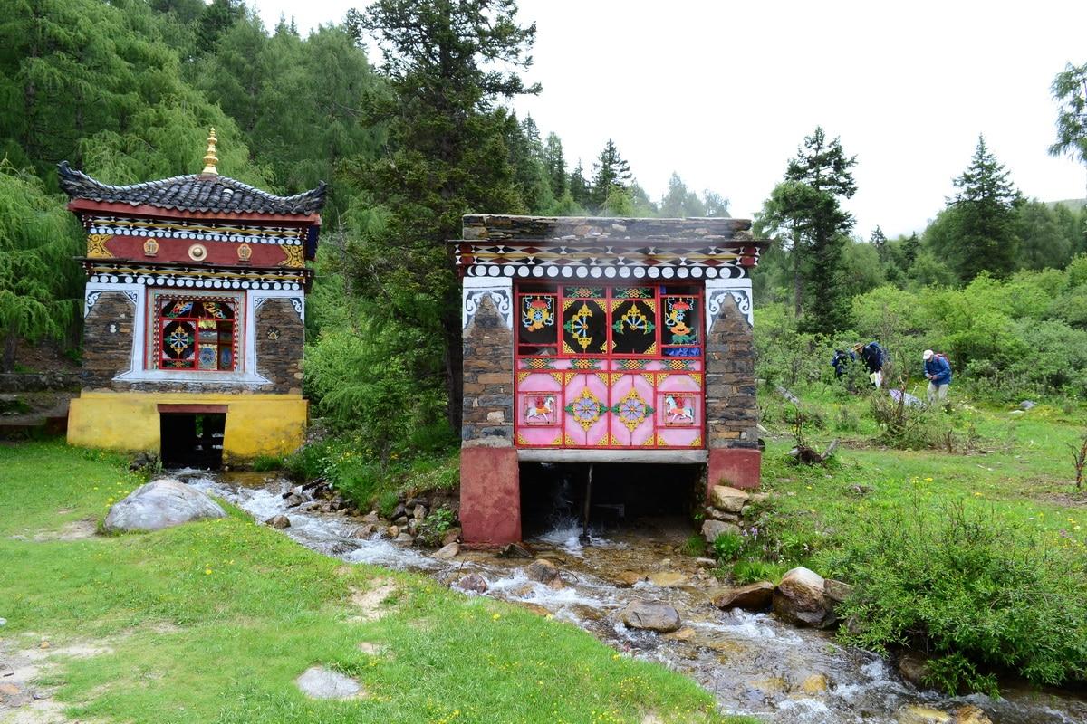 Botanical Tour East Tibet - Sichuan, July 2016  (41)