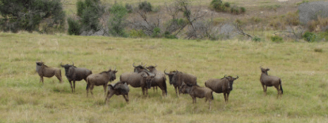 17-sydafrika_175-jpg