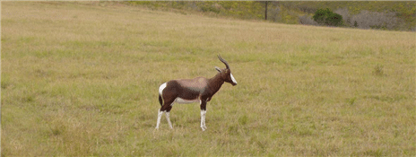49-sydafrika_175-jpg