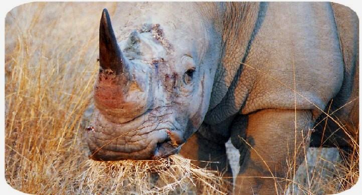 rhino_close_trim