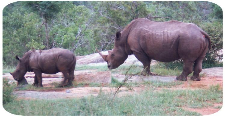 rhino_trim