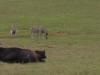 05-sydafrika_175-jpg